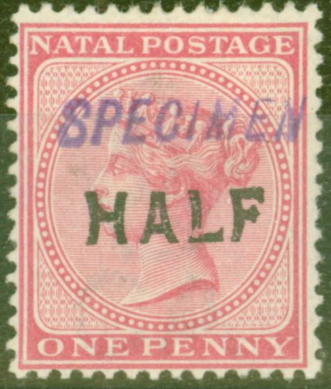 Old Postage Stamp from Natal 1895 Half on 1d Rose Specimen SG125s Fine Mtd Mint