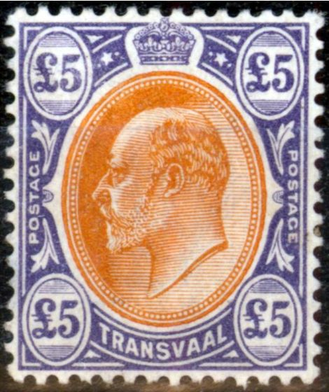 Old Postage Stamp from Transvaal 1903 £5 Orange-Brown & Violet SG259 Fine Very Lightly Mtd Mint Nice Example of this rare high value
